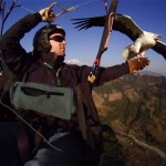 Parahawking in Nepal under threat