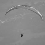 Ozone release EN D comp wing